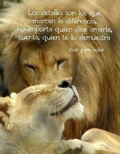 Genial Tiger Love, Lion Love, Unexpected Friendship Quotes, Illusion Quotes, Lion Photography, Lion Quotes, Lion Painting, Don Juan, Majestic Animals