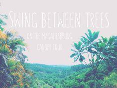 To Do In Joburg - Melanie van Zyl - Magaliesberg Canopy Tour Stuff To Do, Things To Do, Beach Adventure, Honeymoon Planning, Unusual Things, Fun Activities, Canopy, South Africa, Asia