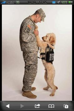 This is the most sweetest and loving picture I've ever seen of a service dog and it's soldier companion.