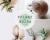 Pendaison de Planzampel avec les Tillandsias (plantes d'air) - « Plantation-PETER »