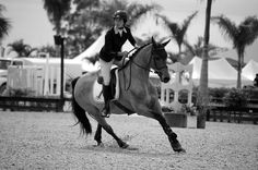 WEF || equestrian show jumping | BW bay jumper