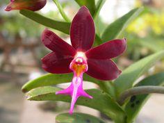De mooiste orchideeën: Epidendroideae