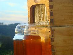 The Flow Hive is a new beehive invention that promises to eliminate the more laborious aspects of collecting honey from a beehive with a novel spigot system that taps into specially designed honeycomb frames. Invented over the last decade by father and son beekeepers Stuart and Cedar Anderson, the s