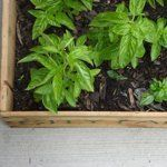 How To Start a Container Garden Home Hacks | Apartment Therapy