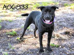 FOUND IN MANATEE COUNTY FLORIDA...PetHarbor.com: Animal Shelter adopt a pet; dogs, cats, puppies, kittens! Humane Society, SPCA. Lost & Found.