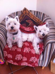 Maisie and Maude