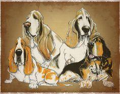 Basset Hounds Drawing  - Basset Hounds Fine Art Print