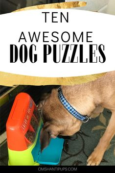 Dog puzzle toys are great at keeping dogs entertained while working their brain, which tires them mentally and physically. Here's the best dog puzzle toys! What is your dream Dog? Looking for my next family member Dog Puzzles, Puzzle Toys, Best Dog Food, Best Dogs, Millionaire Lifestyle, Dog Grooming Shop, Dog Shop, Big Dog Toys, Homemade Dog Toys