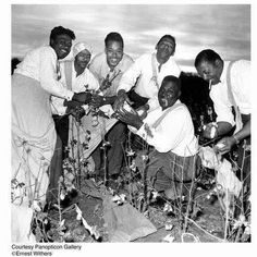 Cotton pickin' time:  Blues greats James Cotton, Little Walter, and Howlin' Wolf (third, fourth and fifth from the left) pose for the camera in a cotton field, pretending to pick cotton. Second from left might be drummer Chico Chism.(Before 1968).