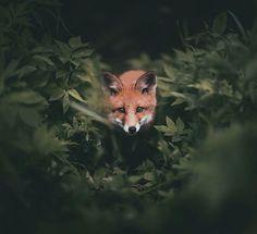 O fotógrafo Konsta Punkka faz cliques intimistas de animais selvagens - Foto…