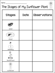 Science Fair Project Template   shatterlion.info   Science Project Plant Growth Charts