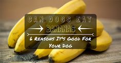 Can Dogs Eat Bananas? 6 Reasons It's Good For Your Dog