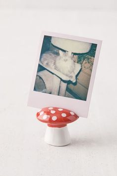 """Whimsical ceramic mushroom-shaped photo stand, perfect for displaying a favorite memory or up to five business cards within the slot on top of the colorful painted finish. Available exclusively at Urban Outfitters.Content + Care. Ceramic Wipe clean Imported Size. Dimensions: 2.38""""dia x 2""""h Picture Holders, Photo Holders, Diy Clay, Clay Crafts, Photo Champignon, Wood Shoe Rack, Zodiac Elements, Cute Clay, Clay Projects"""