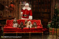 Fine Art Santa Portraits Cocker Spaniels on a Red Christmas Couch with the Best Santa in Dallas Texas at Ivey Photography