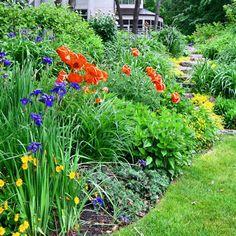 Spring border. Love the colour combination!