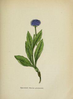 Vilde planter : - Biodiversity Heritage Library