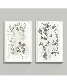 We love to give classics a fresh, modern makeover. For our Piedmont Botanicals, we translated vintage field studies into refreshing shades of whites and gray for a light, updated look. Piedmont Botanicals Framed Print features: Satin finish white wood box frameGlass front