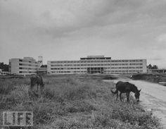 GUATEMALA, Hospital Roosevelt 1953