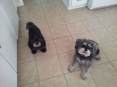 Midge and Addie waiting for a treat