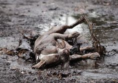 Natural Mud Baths for Dogs