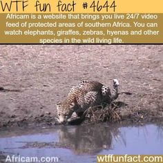 Watch wild animals now as by twenty years from now, they will probably be extinct