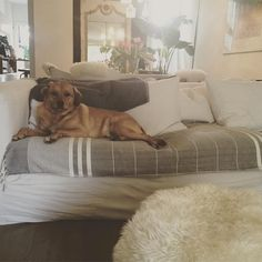 Pup Bogart makes himself at home on actress Meghan Markle's sofa, which is layered with throws. | Photographer: Courtesy of Meghan Markle