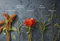 amaranthus, northern sea oats, zinnias, wild grasses, crabapple