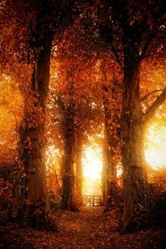 Wooded path... golden light.