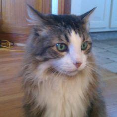 Our beautiful long-haired cat, Mushi Mushi Gila Monster.