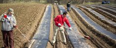 """From Field to Fork"""": Food Banks Start Farming to Feed Needy"""