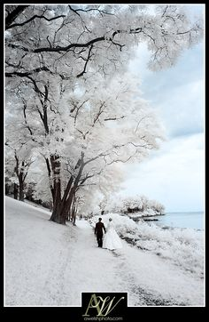 Bride and groom portrait walking together as a couple in otherworldly infrared photo (looks like snow) with white grass and trees (authentic unique wedding photography Rochester NY) awelshphotography.com