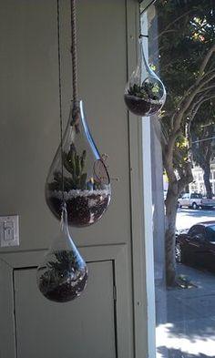 Beautiful hanging terrariums