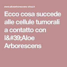 Ecco cosa succede alle cellule tumorali a contatto con l'Aloe Arborescens