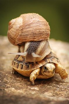 Turtle and Snail (@Kelly Teske Goldsworthy Teske Goldsworthy Wilson)