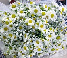 Dünyanın en güzel çiçekleri papatya..