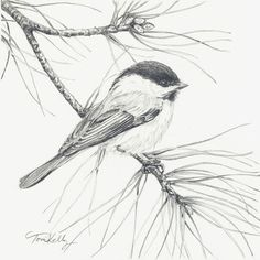 Christmas Chickadee by Toni Kelly graphite on watercolor paper. Bird Drawings, Animal Drawings, Cool Drawings, Drawing Sketches, Drawing Ideas, Sketching, Drawing Birds, Sketches Of Birds, Pencil Drawings Of Nature