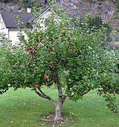 Perhaps fruit trees?  Dwarf apple.  (many apples need a different kind of of apple nearby to make fruit).