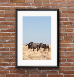 Wildebeest, Africa, Wildlife, Safari, Art Print, Wall Art, Neutrals, Gifts, Photography, Travel, Collectible, Home Decor, Fine Art by KathrynDianaPhoto on Etsy https://www.etsy.com/listing/508312379/wildebeest-africa-wildlife-safari-art