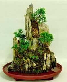 Compared to the previous style the roots of the trees here expand in splits as well as holes of rocks. Japanese Bonsai Tree, Above The Rim, Bonsai Tree Types, Waterfall Design, Bonsai Styles, Root System, How To Grow Taller, Deciduous Trees, One Tree