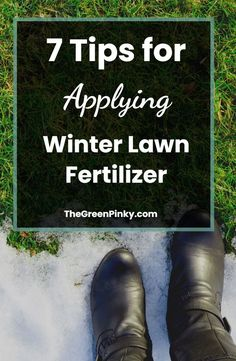 Don't Let Your Lawn Die from the Winter Weather. Applying Winter Fertilizer is Simply and Will Save You a Headache in the Spring #TheGreenPinky #Lawncare #Winter