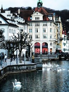 Lucerne, Switzerland wonderful memories of eating fondue with friends at edge of the lake with swans swimming by, just like in this picture. What a beautiful town.