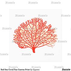 Red Sea Coral Fan Canvas Print