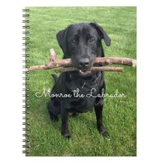 Black Lab with two sticks Dog Photo and Name Notebook   welcome back to school gifts, home schooling curriculum, back to school selfie #backtoschoolmonday #backtoschool2021 #BackToSchoolEssentials, back to school, aesthetic wallpaper, y2k fashion Back To School For Teens, Back To School Crafts, Welcome Back To School, Back To School Hacks, Back To School Essentials, School Tips, Back To School Outfits, Middle School, School Ideas