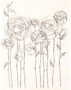 ranunculus drawing