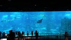 Review of S.E.A. Aquarium on Sentosa Island in Singapore by Wilson Family  Travel Blog Singapore Things To Do, Singapore With Kids, Us Travel, Family Travel, Hotel Reviews, Adventure Travel, Aquarium, Alice, Around The Worlds