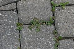 natural way to kill weeds
