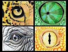 draw animal eyes - Google Search