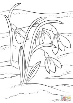 Adult Coloring Pages - Spring Break Coloring Sheets Inspirational Snowdrops First Sign Of Spring Coloring Page Coloring Pages Nature, New Year Coloring Pages, Spring Coloring Pages, Flower Coloring Pages, Coloring Pages For Kids, Coloring Sheets, Coloring Books, Free Coloring, Spring Sign