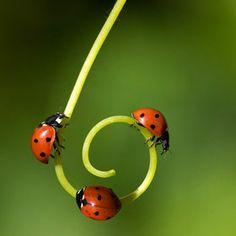 "Lady bug follow the leader...500px / Photo ""***"" by SergKuran"