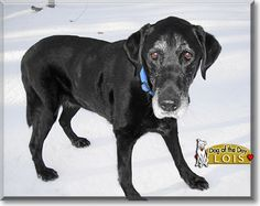 Read Lois's story the Black Labrador from Sterling Forest, New York and see her photos at Dog of the Day http://DogoftheDay.com/archive/2011/March/04.html .